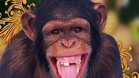imagenes comicas de monos monos gallery