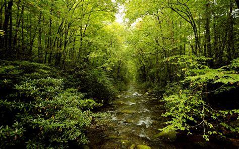 forest green green forest wallpaper