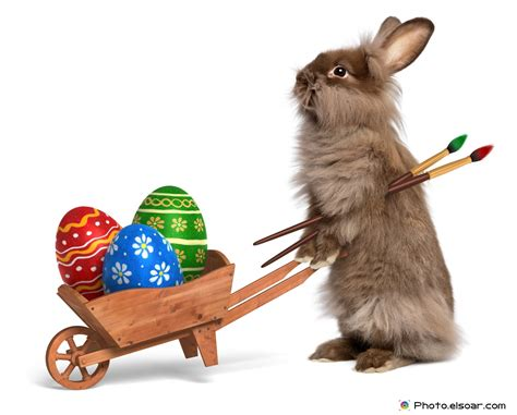 Witzige Osterhasen Bilder by The Rabbits In Pictures Elsoar