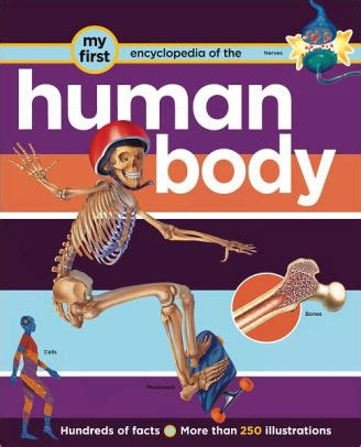 my first human body my first encyclopedia human body by robert coupe nook book nook kids read to me barnes