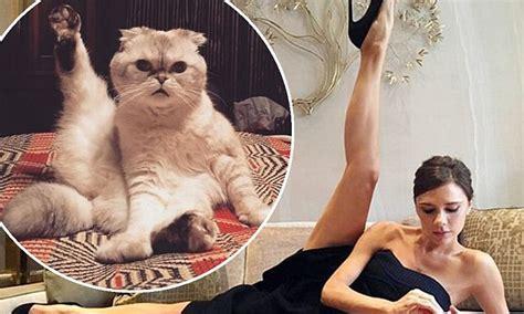 taylor swift cat advertisement taylor swift s cat imitates flexy victoria beckham daily