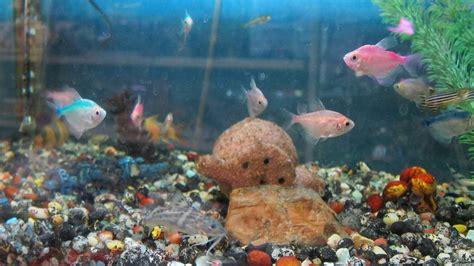 martas pet shop toronto pet store pets tropical fish