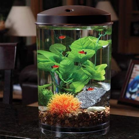 betta fish tank light 9 best best betta fish tanks images on pinterest fish
