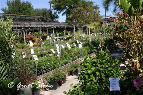 support your local nursery barton springs nursery great