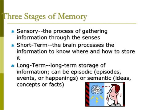 Memory Lecture Powerpoint 1 Memory Powerpoint