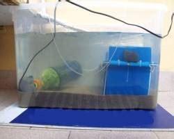 lada uv per tartarughe acquatiche home page ruga tartaruga