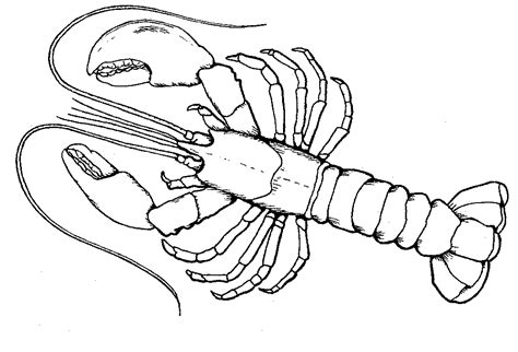 arthropod coloring page parent and teacher resources offshorelobster org