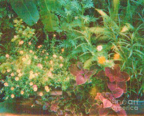 florida flower garden florida flower garden photograph by trudy brodkin storace