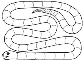 snake template syllable snake the will say a word and for