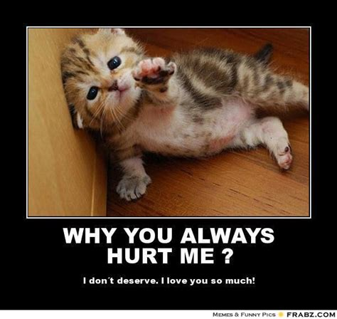 Why Me Meme - pin images of why you always hurt me helpless kitten meme