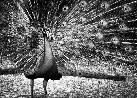 colorless beauty queen photograph by jim perpetos