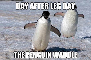 Funny Penguin Memes - leg day memes on pinterest