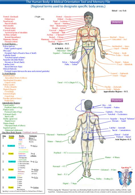 Anatomical Terms Worksheet by Directional Terms Anatomy And Physiology Dradgeeport133