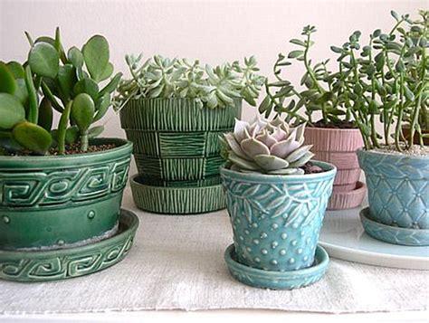 Ideas For Indoor Succulents Design Indoor Gardening Ideas To Beautify Your Space