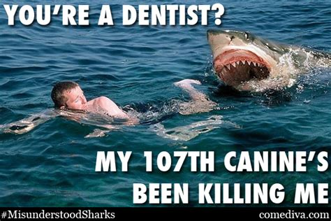 Meme Shark - cute shark meme