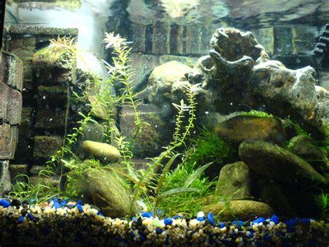 attractive aquarium background technosamrat