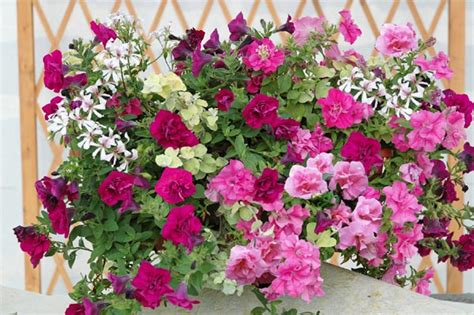 Fleurs Qui Resistent Au Vent by Jardiniere Fleurie Au Balcon Et Sur La Terrasse