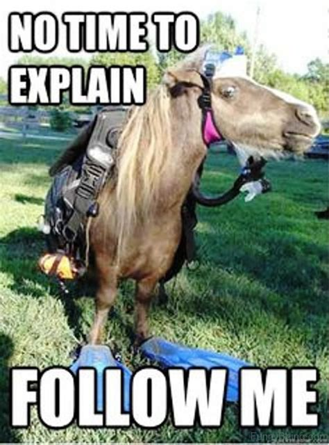 No Time To Explain Meme - 30 funny horse memes images pictures graphics picsmine