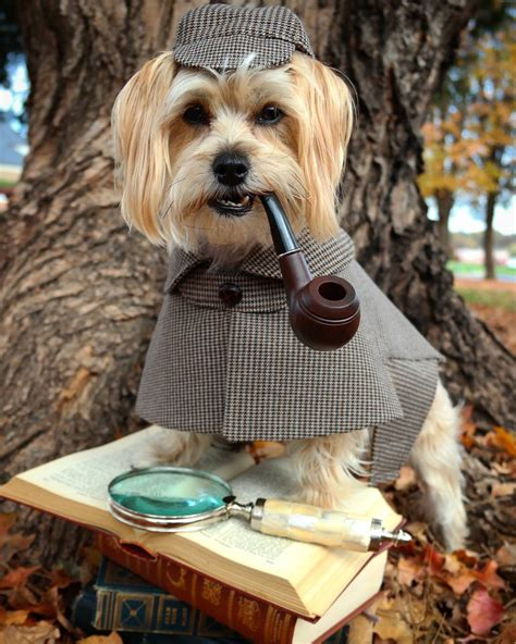 for the dogs these are the top 10 costumes trending for 2016 anguspost