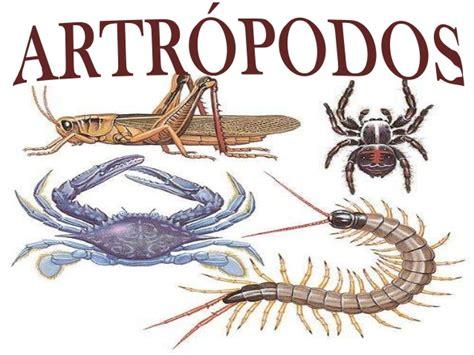 imagenes animales artropodos artropodos