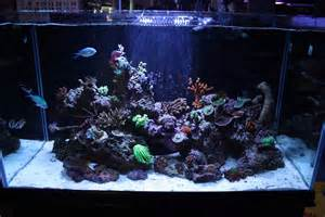 Oceanic Aquariums Oceanic Illuminata Rimless Reef Aquarium