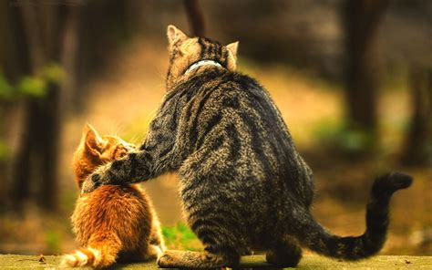 wallpaper of cat family 29 cat backgrounds wallpapers images design trends