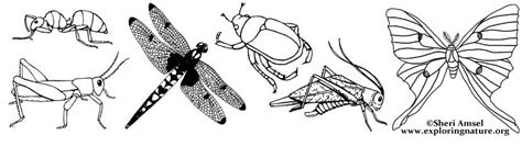 jungle insects coloring pages jungle insects coloring pages murderthestout