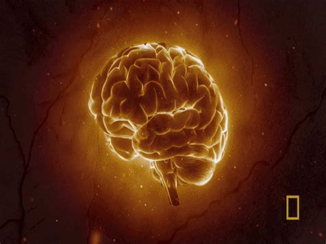 brain mind blown gif by national geographic channel find