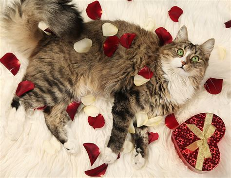 valentines day animals s day gift ideas for pets popsugar pets