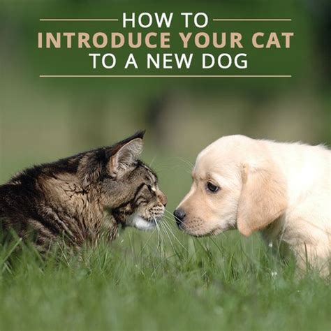 introducing cats and dogs the world s catalog of ideas