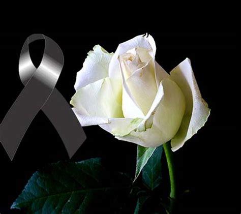 imagenes de luto blancas rosas blancas de luto imagenes de luto