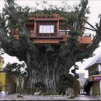 real treehouse a real tree house tree house fantasy pinterest