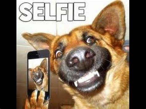imagenes realistas de animales perros graciosos youtube