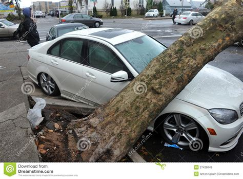 car with tree image tree felt to the car editorial stock image image of district 27428649