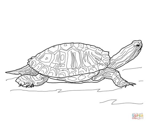 Red Eared Slider Turtle Coloring Page Free Printable Snapping Turtle Coloring Pages