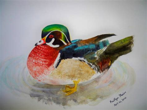 watercolor wood duck by manicmagician on deviantart wood duck watercolor by asteriskate on deviantart