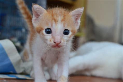 Sho Rainbow So Kucing Sho Kucing Dan Baby Cat Kittens 250ml the plight of being born a stray s story animalcare petfinder my wagazine