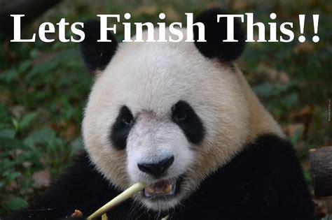 panda meme panda meme lets finish this by sirenwatchersex meme