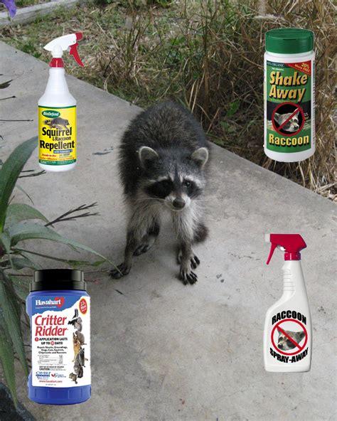 getting rid of raccoons in backyard get rid of raccoons in backyard 28 images how to get