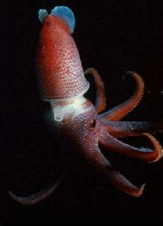 how do octopus change color how do squid and octopuses change color scientific american