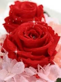 imagenes de rosas rojas para una madre imagen para regalar por el d 237 a de la madre de lindas rosas