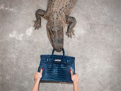 Shields Hermes Birkin by Alligator Eats 100 000 Birkin Bag In Shields Shoot