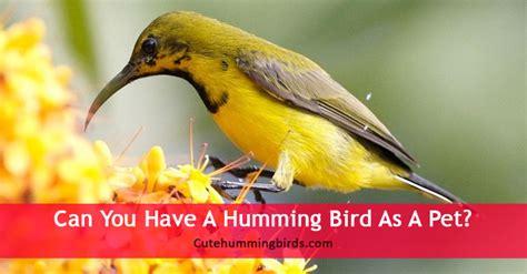 humming bird   pet cute humming birds