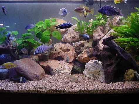 Decors Aquarium by D 233 Cor Aquarium Cichlid 233 S Malawi