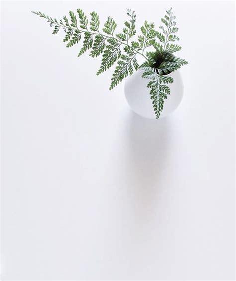 felce da vaso piante sempreverdi da vaso e giardino consigli e suggerimenti