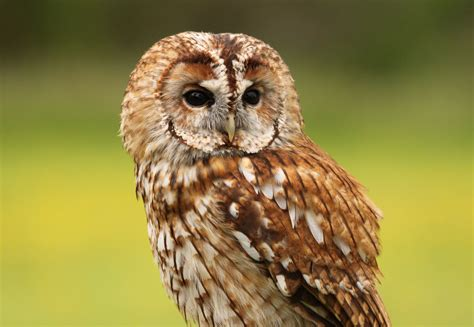 Owl In owl wallpapers images photos pictures backgrounds