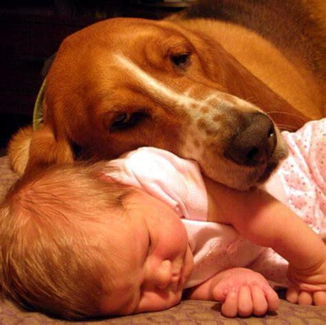 imagenes de niños jugando con animales fotos de ni 241 os con perros