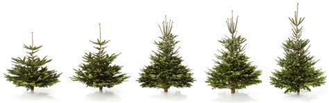 weihnachtsbaum versand weihnachtsbaum bestellen weihnachten 2017