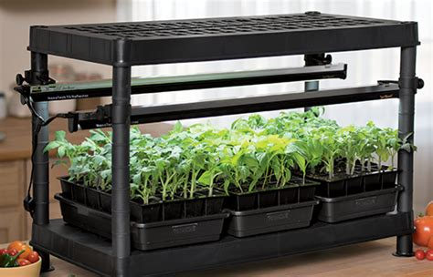 starting seeds indoors lights growing tomatoes from seed tomatoes gardener s supply