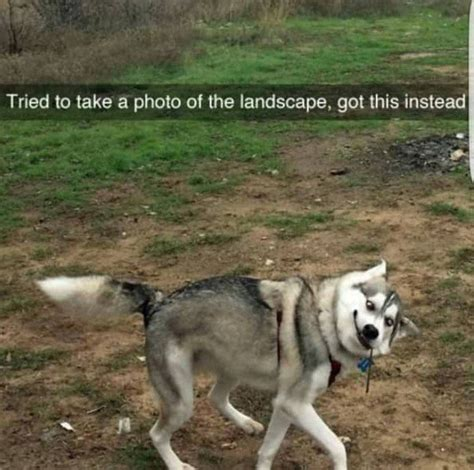 animal memes wholesome animal memes 30 photos thechive